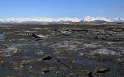 alaska bruten stor en stor bitis Fotografering för Bildbyråer