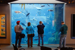 Alaska - centro de visita da vida marinha dos povos Imagens de Stock