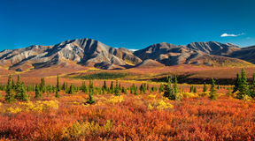 Alaska Denali National Park in autumn. Autumnal Denali Nt Park Scenery with mountain range Stock Photos
