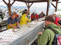 Alaska - estaci?n de la limpieza de los pescados del halibut del home run fotos de archivo