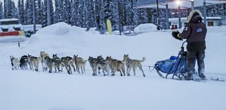 Running of the Dogs - Iditarod. Alaska is famous for its beautiful landscapes. It is also famous for its many dog sled races. The most infamous being the royalty free stock images