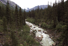 Alaska flod Arkivbilder