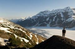 alaska glaciärlax Arkivfoto
