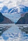alaska glaciärsawyer Arkivfoton