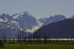 Alaska gräsplan Arkivfoton