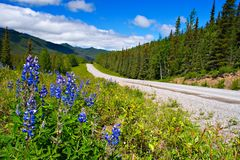 Alaska Highway Wildflowers. A scenic view of the Alaska highway in northern British Columbia, Canada stock images