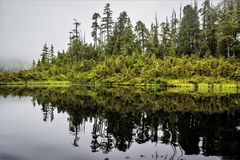 Forest in Water, Alaska. Alaska is home to the two largest national forests in the United States. The Tongass National Forest in Southeast Alaska is the largest Royalty Free Stock Images