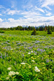 Alaska - Kenai Peninsula Wildflowers 2 Stock Photos