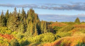 alaska krawędzi wieczór lasu świerczyna Zdjęcie Stock