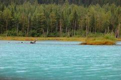 alaska landskap arkivbild