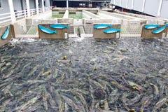 Free Alaska Macaulay Salmon Hatchery Juneau Royalty Free Stock Photo - 28868425
