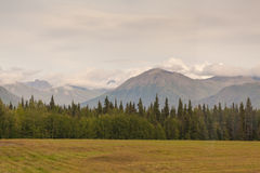 Alaska mountain range. Landscape view of Alaskan mountain range with trees and field in the foreground Royalty Free Stock Photography