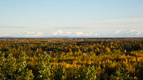 The Alaska Range in Fall. The Alaska mountain range rises above fall colors Stock Image