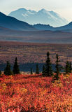 Alaska Mt McKinley with red autumn tundra Stock Photo
