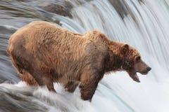 alaska niedźwiadkowa katmai siklawa zdjęcia royalty free