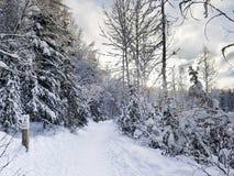Alaska odprowadzenia ślad Zdjęcie Stock