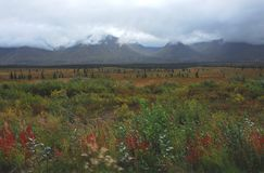 Alaska- Panoramic Landscape of Wildflowers and Mountains stock images
