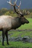 Alaska, península de Kenai Fotografia de Stock