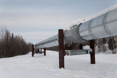 Alaska Pipeline. Running through the forest Stock Photography