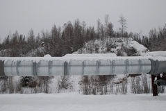 Alaska Pipeline. Running through the forest royalty free stock photo