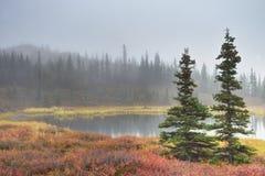 Alaska pond and tundra in early morning light. Stock Photo