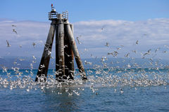 alaska ptaków homeru morza niebo Obrazy Royalty Free