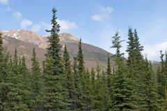 Alaska range. Alaska mountain range and forest Stock Photography
