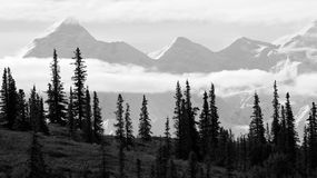 Alaska range behind forest. Alaska range behind silhouette of trees taken from Wonder Lake in Denali Stock Images
