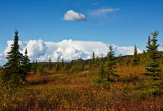 Alaska's Wilderness in Fall Royalty Free Stock Photos