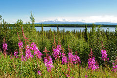 Alaska Scenery. A view of a lake and mountains in Alaska stock photos