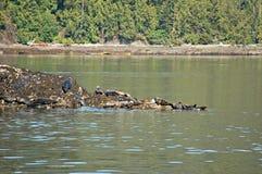 alaska skyddsremsor Royaltyfri Bild