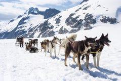 Alaska - Sledding för hund Royaltyfria Bilder