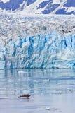 Alaska Small Boat Massive Hubbard Glacier royalty free stock photography