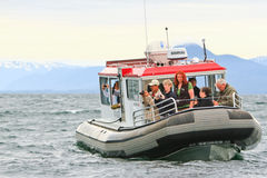 Alaska - Small Boat Whale Watching 2 Royalty Free Stock Photography