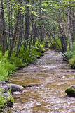 Alaska Stream. Small stream meanders through lush foliage and trees near Anchorage, AK Royalty Free Stock Images