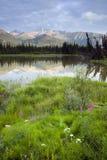 alaska vildmark Arkivfoto