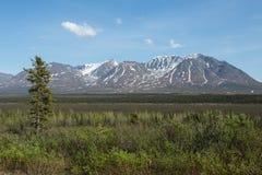 Alaska vildmark Royaltyfri Bild