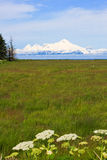 Alaska - Volcano Mount Iliamna Stock Image