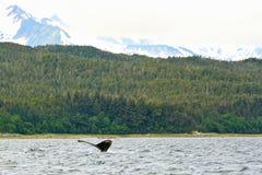 Alaska Whale in the Remote Wild Stock Photo