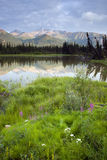 Alaska Wilderness Lush Landscape Grassy Wetland Stock Photo