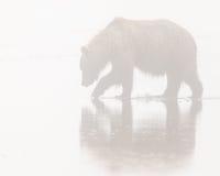 Alaskabo brunbjörn i dimma Arkivfoton
