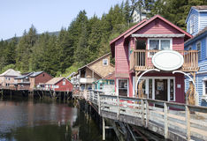 Alaskabo trägata Arkivfoto