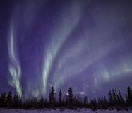 The Alaskan Aurora. Aurora shines over the Alaskan town of Wasilla on a cold winter night Royalty Free Stock Image