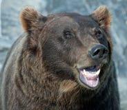 Alaskan Brown Bear Royalty Free Stock Photos