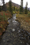 An Alaskan Creek in the fall. A creek flows across the Alaskan back country during a beautiful fall day Royalty Free Stock Photography