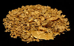 Alaskan Gold Stock Image