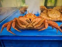Alaskan grande caranguejo lifed fotos de stock royalty free