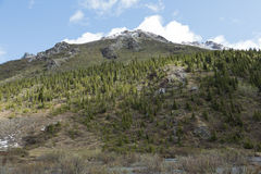 Alaskan Hillside Royalty Free Stock Images