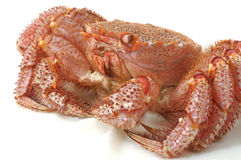 Alaskan king crab Royalty Free Stock Photos