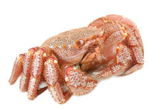 Alaskan king crab Royalty Free Stock Image